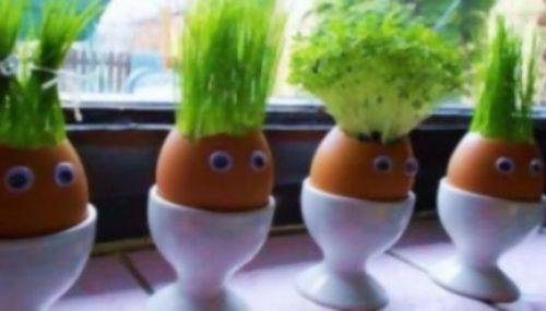 Semilleros o alm cigos caseros y originales el horticultor - Tierra para semilleros ...