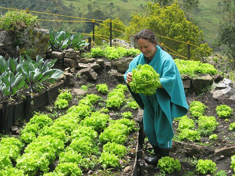 Hospital en Colombia cura a sus pacientes con plantas