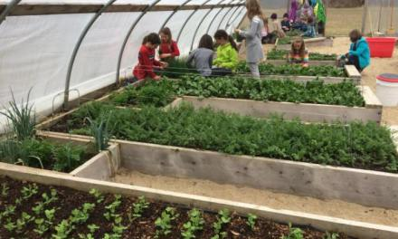 Cultivar tus propios alimentos, asignatura obligatoria en todos los colegios