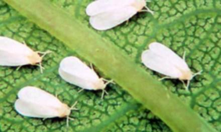 11 plagas más comunes de nuestro jardín