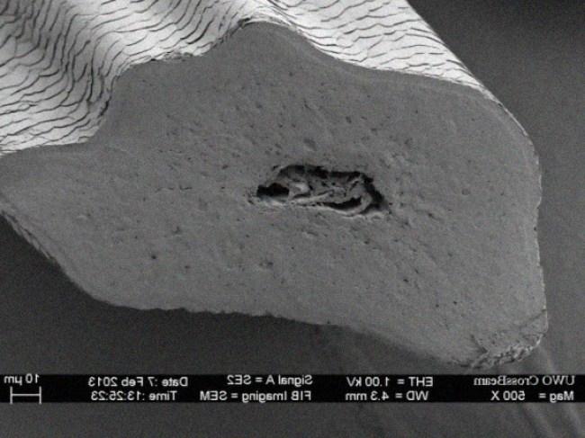 , Micromundo a través de un microscopio