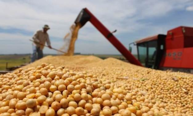 Monsanto no podrá patentar semillas en Argentina