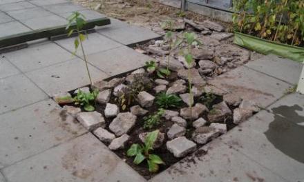 Convirtiendo un desierto de cemento en una Jungla de Abundancia