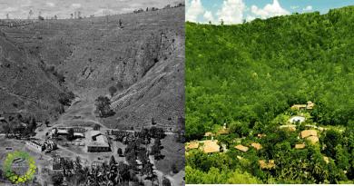 , Pareja planta 2 millones de árboles en 20 años y logra restaurar un bosque