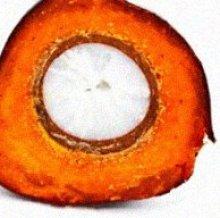 Cut Oil Palm Fruit