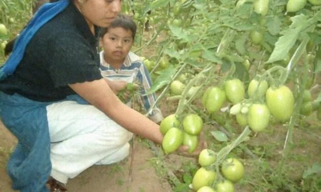 Una estudiante le enseña agricultura sustentable a madres solteras