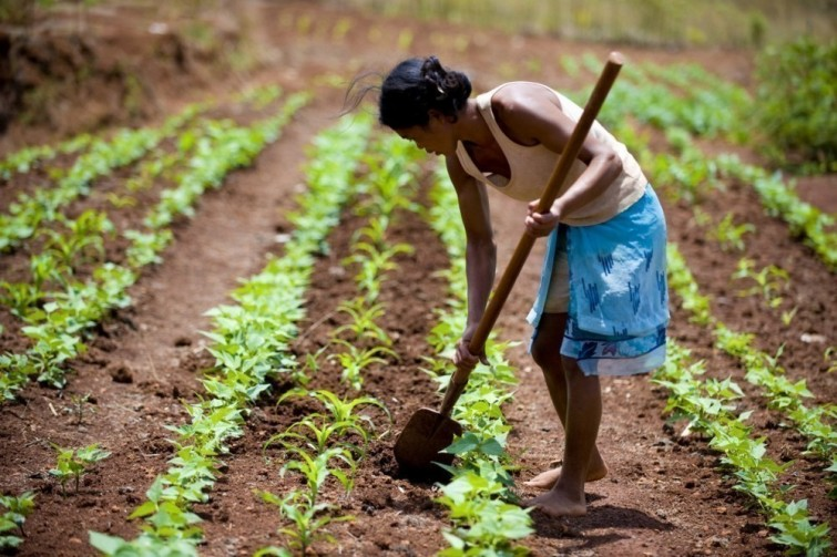 Una alumna le enseña agricultura sustentable a madres solteras- méxico