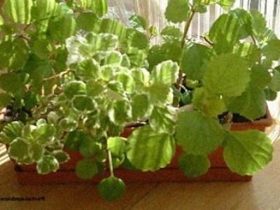 10 Plantas De Interior Resistentes Bien Faciles De Cuidar El - Plantas-de-interior-resistentes