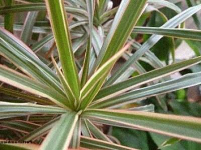 Plantas Resistentes De Interior Amazing Poto With Plantas