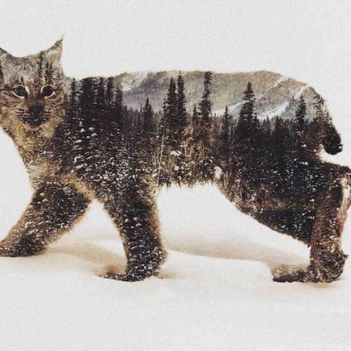 Fotografía de doble exposición captura la esencia de los animales en los paisajes del Ártico