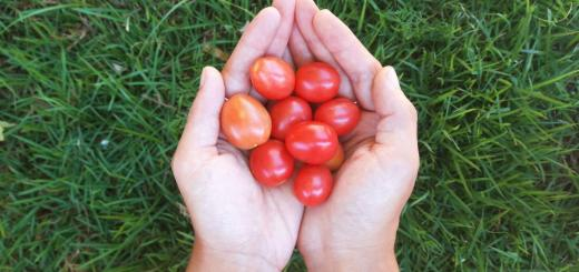 9 dicas para plantar tomatinhos orgânicos em casa (ou no apartamento) o ano todo