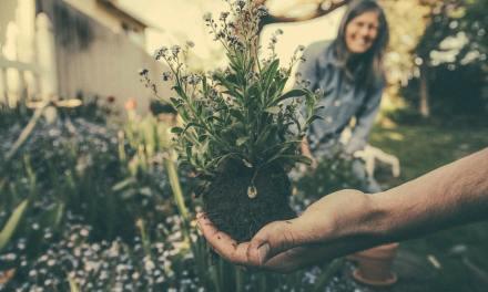 4 Maneras de practicar la permacultura en su día a día