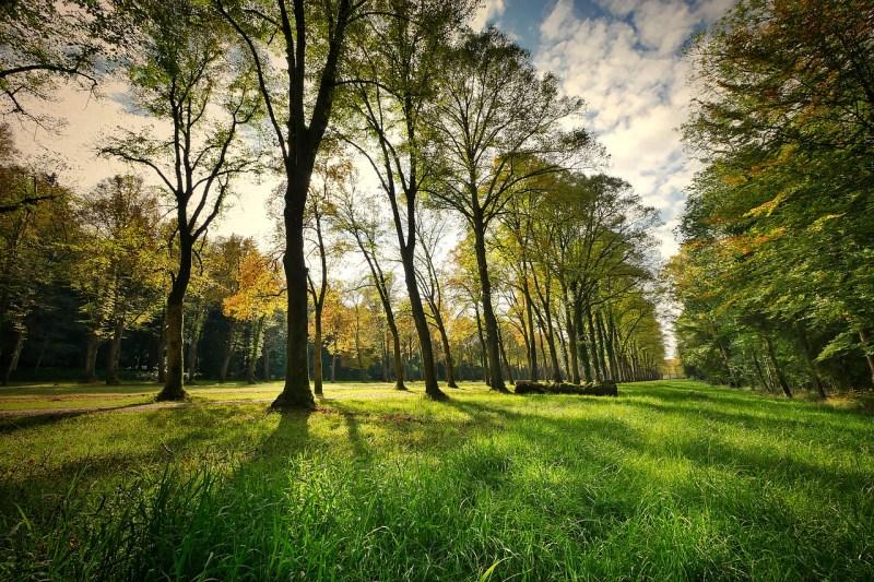 , Intendencia de Montevideo, Uruguay, propone eliminar el uso del glifosato en áreas verdes de la ciudad