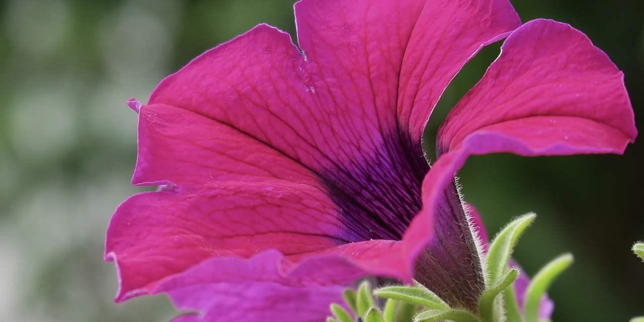 5 flores que alejan a las plagas de su huerto