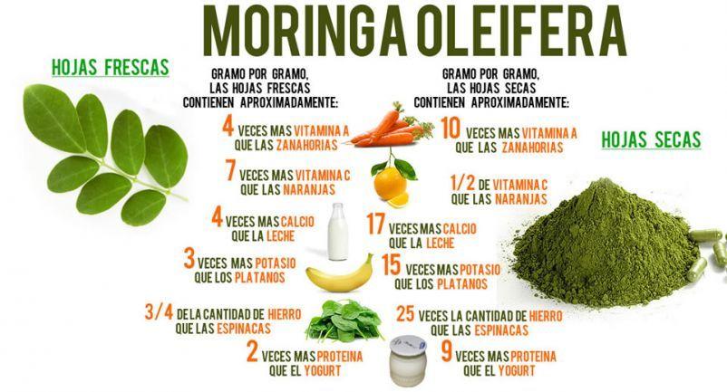 Moringa Oleífera – Para que Sirve y cuáles son sus Beneficios