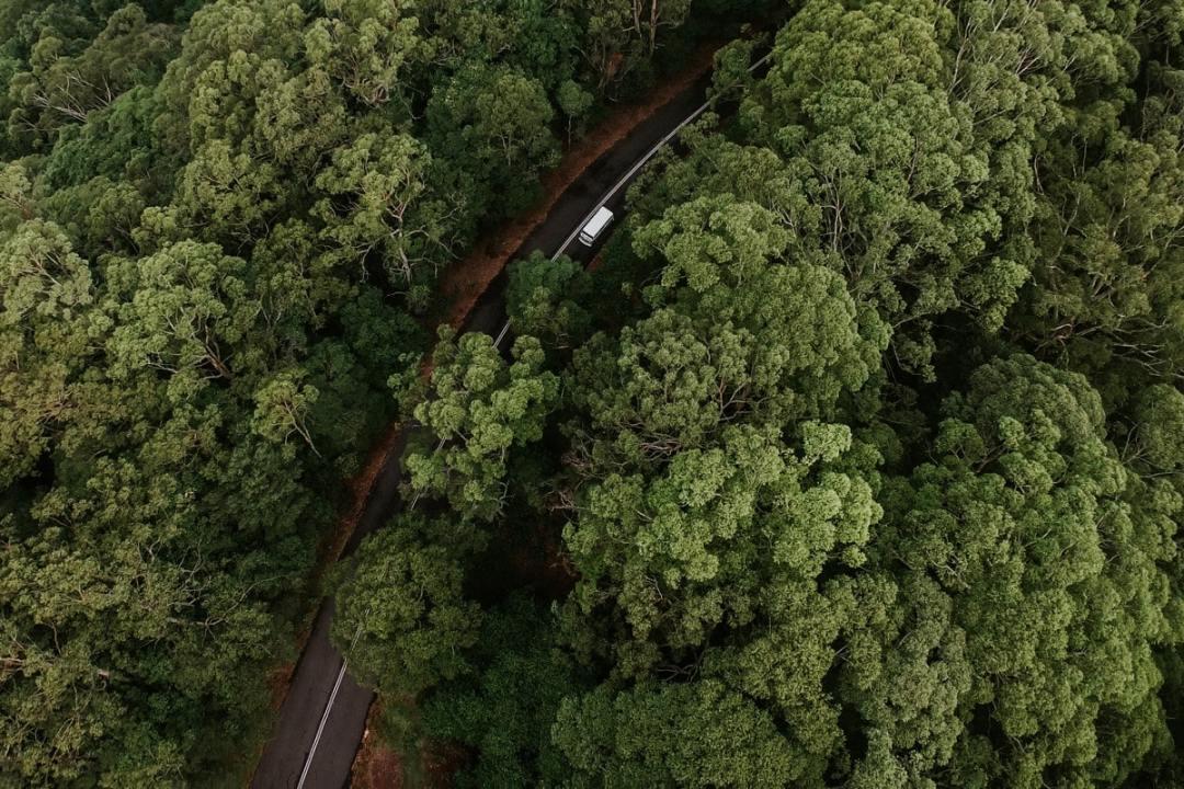 Australia va a plantar 100 mil árboles diarios contra el calentamiento global