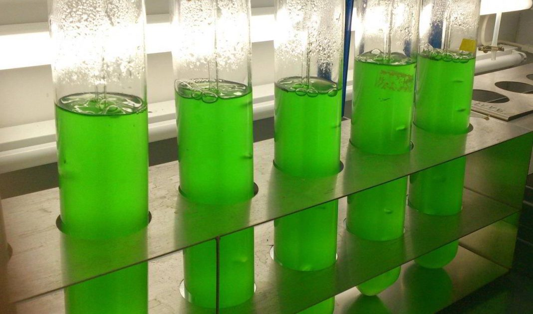 Científicos descubren herbicida natural que puede sustituir a glifosato