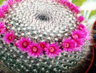 Diferentes tipos, especies y clases de Cactus y su cultivo