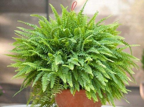 Tenga al menos una de estas plantas en su casa: son verdaderas