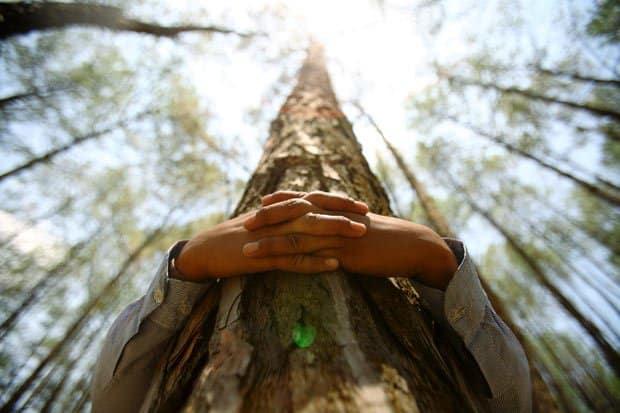 Abrazando un árbol