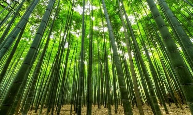 ¿Por qué el bambú se considera la materia prima del futuro?