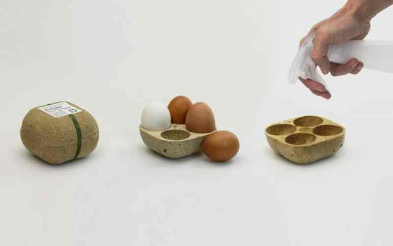 El embalaje de huevos que puede ser plantado después de su uso