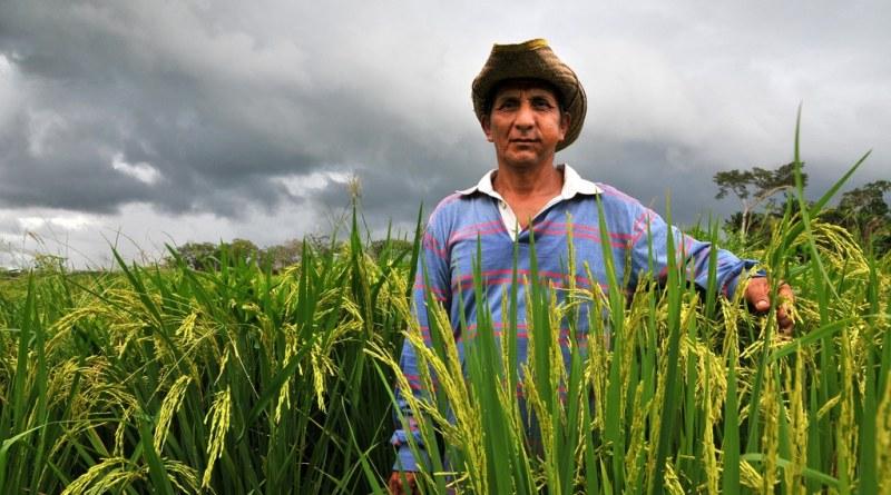 Bolivia será alimentariamente  autosuficiente para 2020 invirtiendo en pequeños agricultores