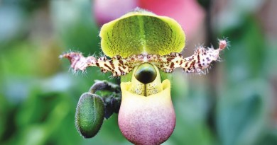Las orquídeas, Las orquídeas purifican el aire, ayudan a calmar los nervios y alivian los dolores de cabeza.