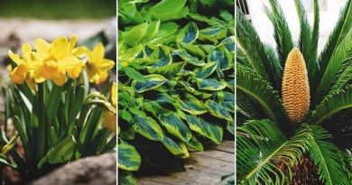 , 38 plantas comunes que son venenosas para tus mascotas