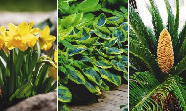 38 plantas comunes que son venenosas para tus mascotas