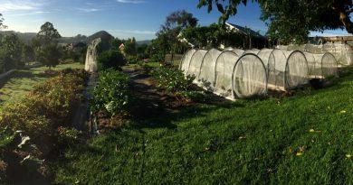 , Proyecto demuestra que con menos de media hectárea de tierra se puede alimentar hasta 50 familias