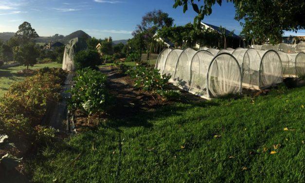 Proyecto demuestra que con menos de media hectárea de tierra se puede alimentar hasta 50 familias