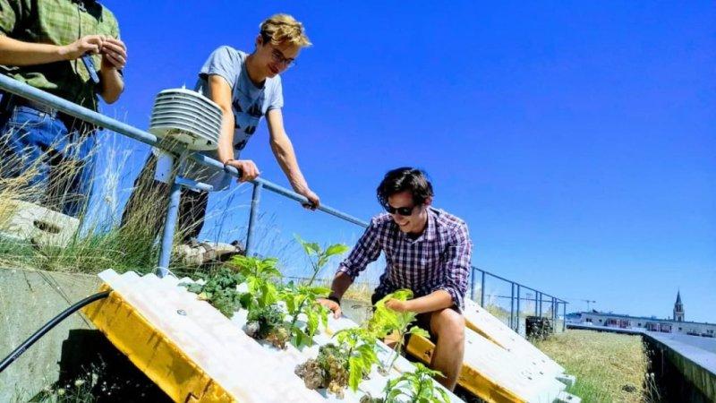 Agrónomo brasileño crea la primera teja hidropónica del mundo