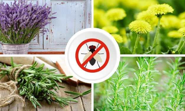 6 hierbas y plantas aromáticas que actúan como repelente natural de moscas