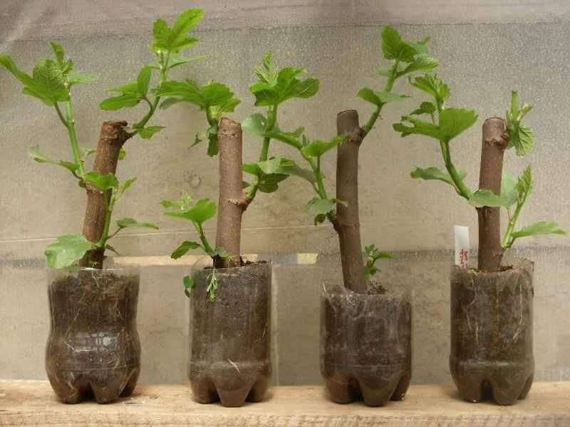 Cómo reproducir plantas mediante esquejes