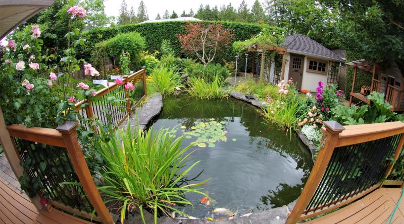 Cómo hacer un estanque con plantas comestibles