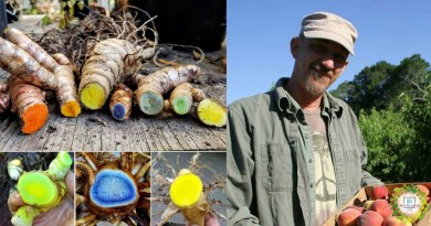 , Agricultor recupera variedades de Cúrcuma en peligro y da un mensaje inspirador para la humanidad
