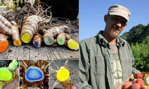 Agricultor recupera variedades de Cúrcuma en peligro y da un mensaje inspirador para la humanidad
