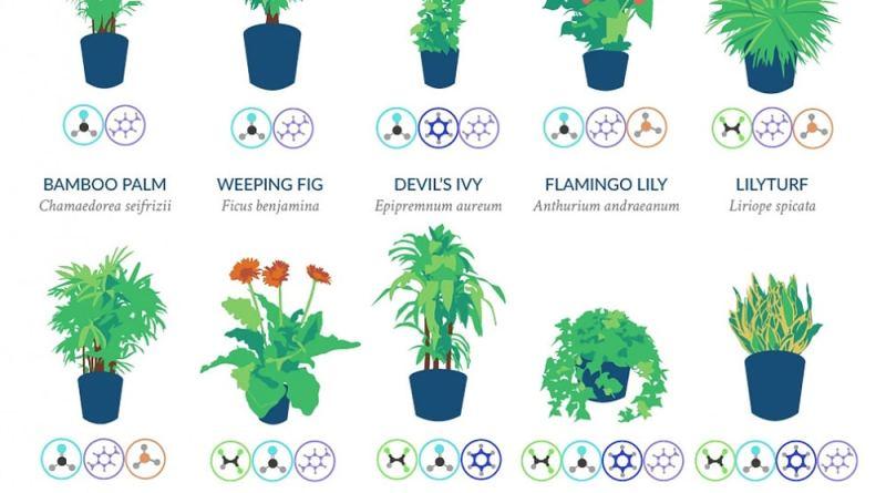 La NASA revela una lista de las mejores plantas para purificar el aire de tu hogar