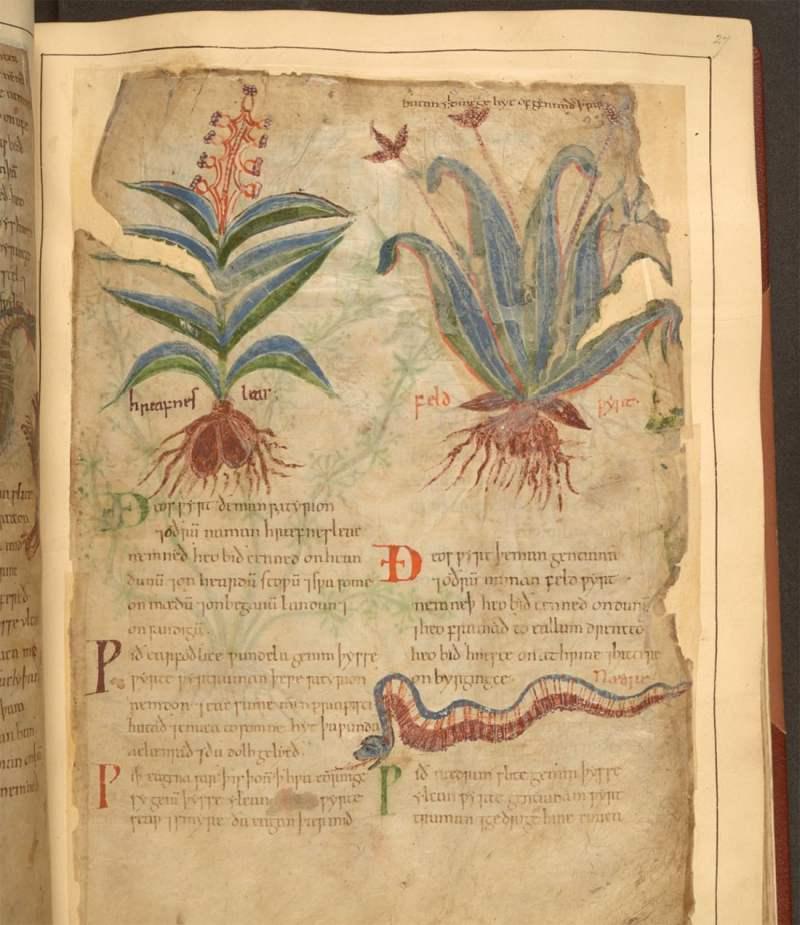 Libro de hierbas medicinales de 1000 años de antigüedad disponible en línea