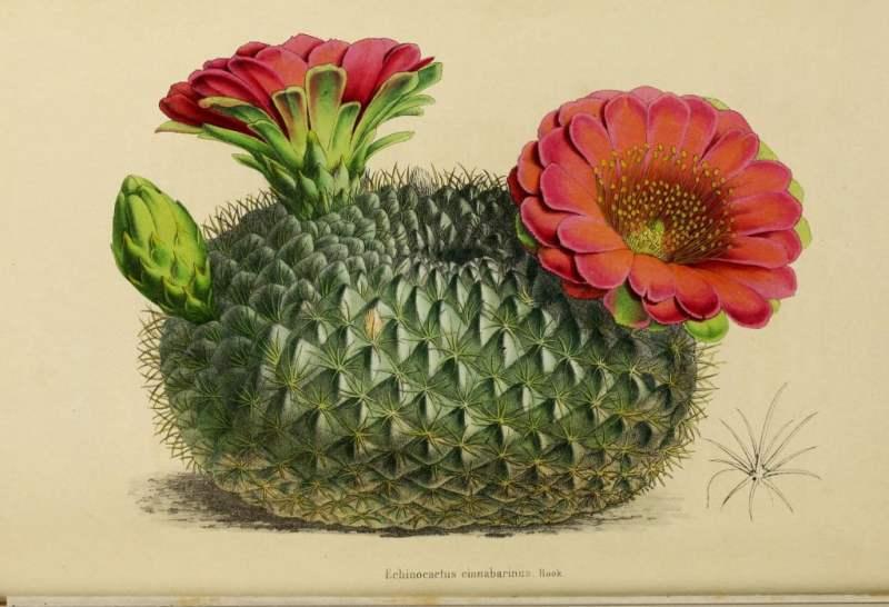 Más de 150,000 ilustraciones gratuitas de hongos, plantas y animales