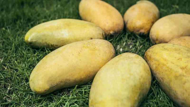 Propiedades y Beneficios del Mango