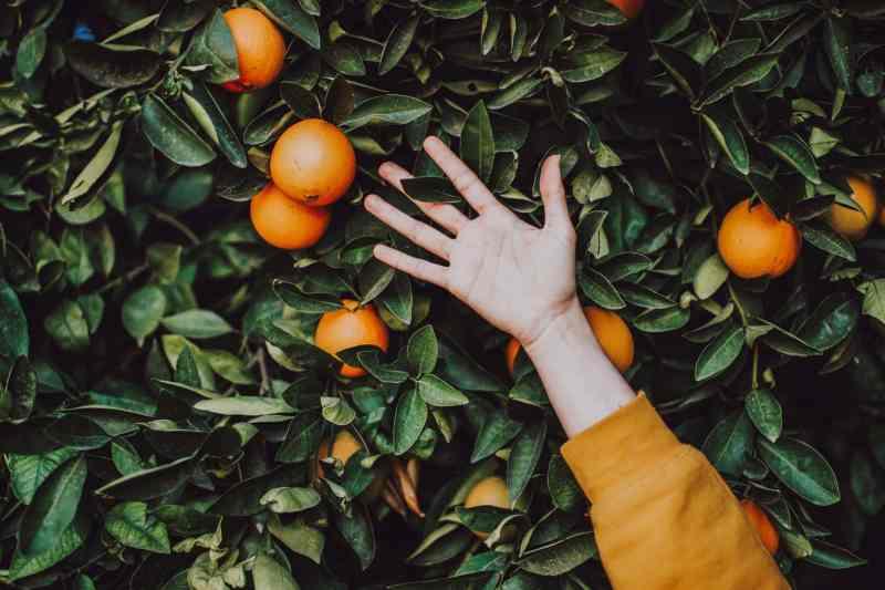 5 tipos de alimentos para fortalecer su sistema Inmunológico