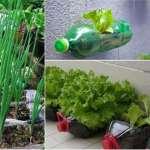 10 alimentos que podemos cultivar en botellas de plástico