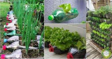 , 10 alimentos que podemos cultivar en botellas de plástico