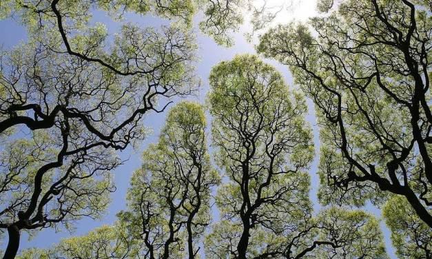 Los árboles son conscientes de sus vecinos y les dan espacio