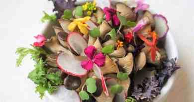 , 20 Flores comestibles y nutritivas que enriquecerán tu próxima receta