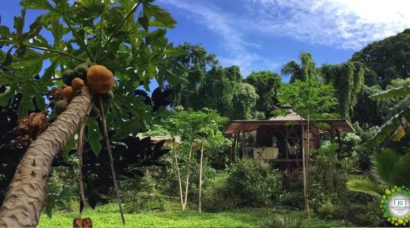 Familia aplica la permacultura para vivir «fuera del sistema»