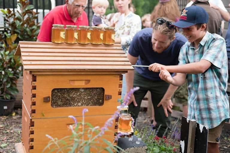 Padre e Hijo han aumentado la población mundial de abejas