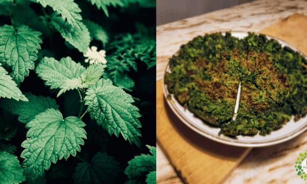El auge de la ortiga: El alimento medicina de nuestros ancestros + Recetas